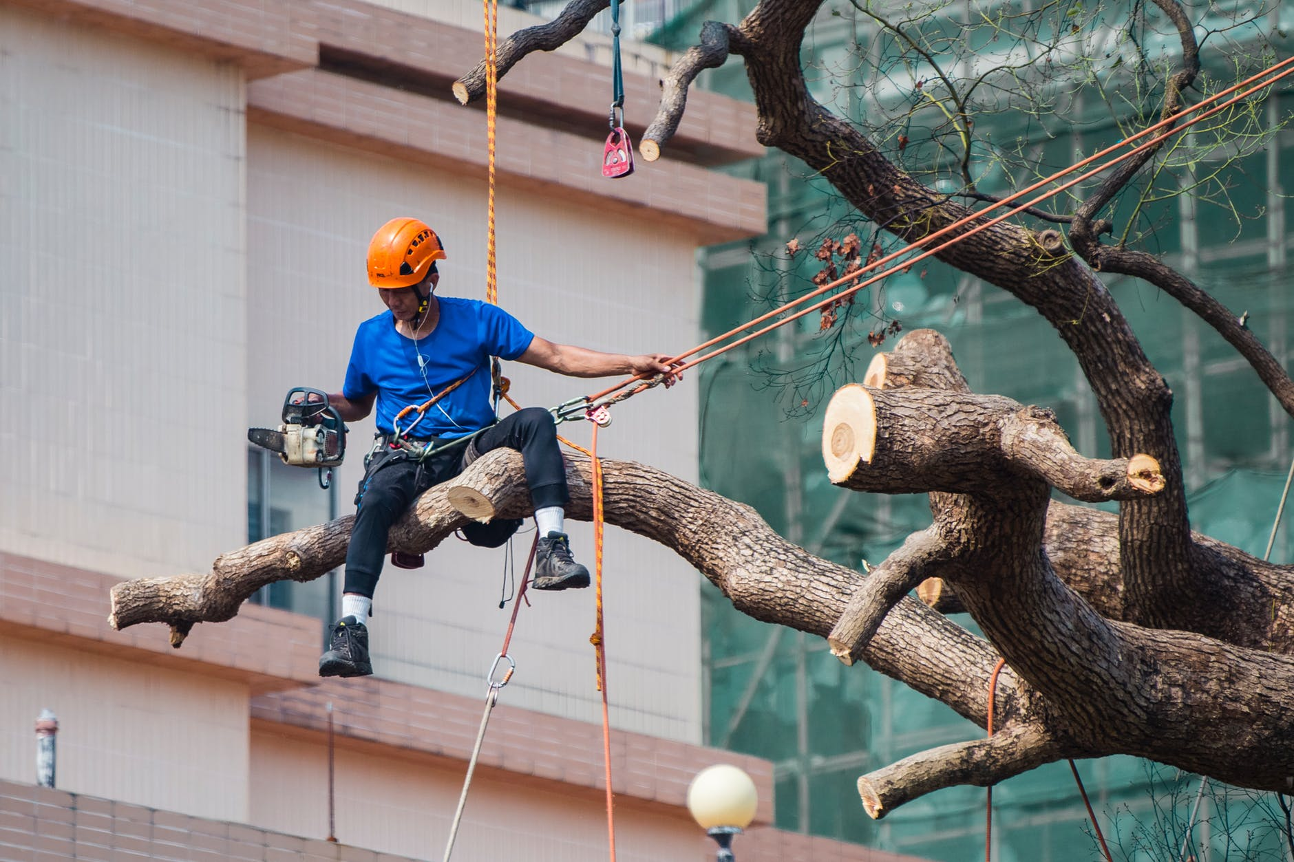 Tree service professional limbing a tree