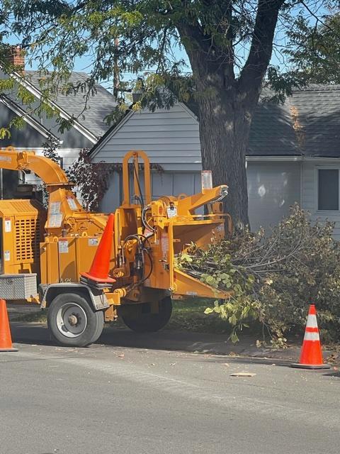 Removing a tree in Wheat Ridge, CO